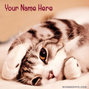 Write Name On Beautiful Cat Cute Profile Image