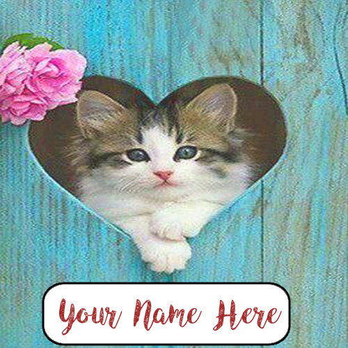 Write Name Beautiful Cutest Cat Profile Image Edit Online My Name Pix Cards